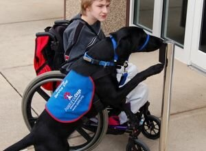 Photo of an assistance dog opening a door for a boy in a wheelchair
